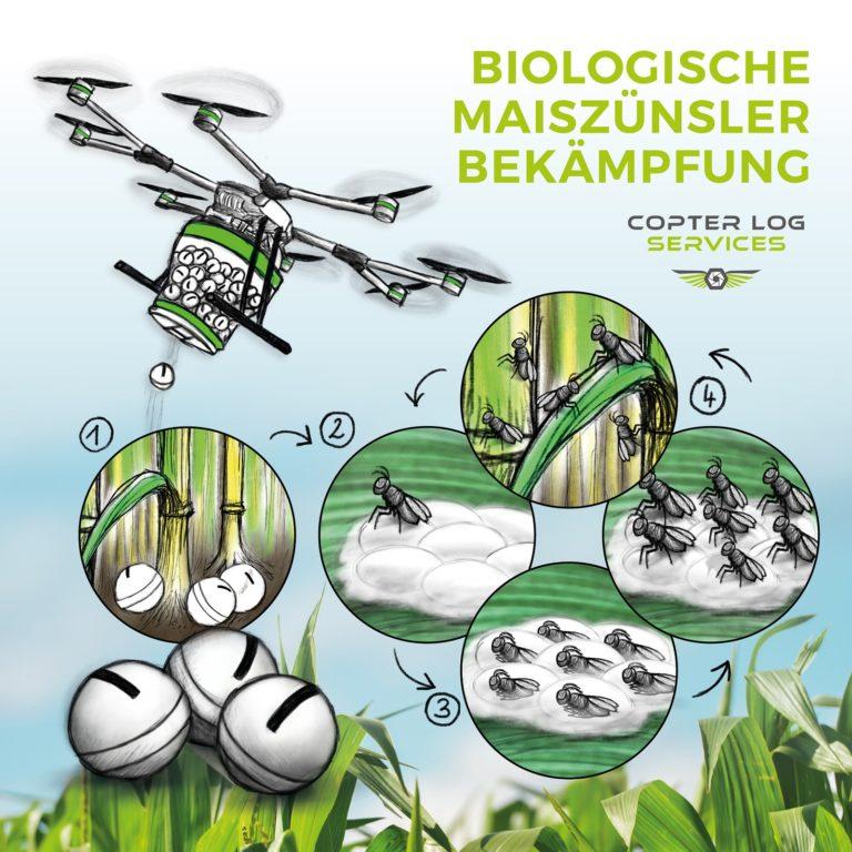 Biologische Maiszünslerbekämpfung